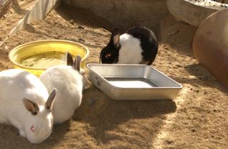 岡山市で平成26年度日本獣医師会獣医学術年次大会が開催