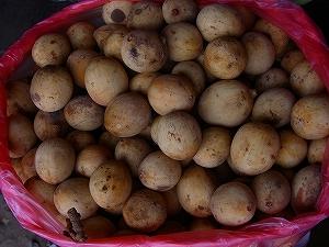 サバ州で出会った果物