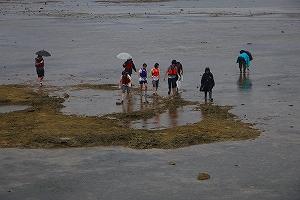 久米島のイノーで生物観察