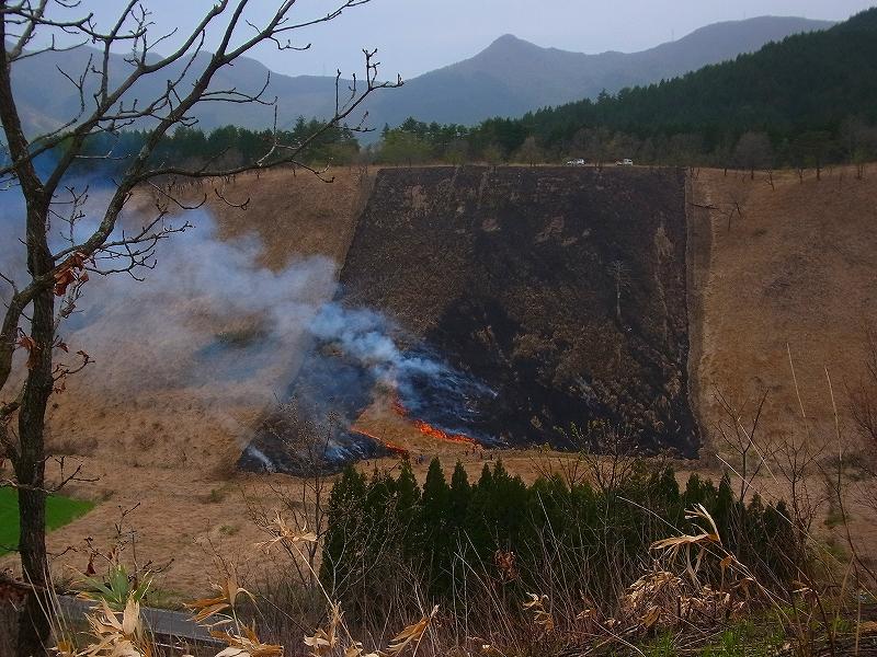 鳥取大学教育研究林・蒜山の森の「山焼き」を見学