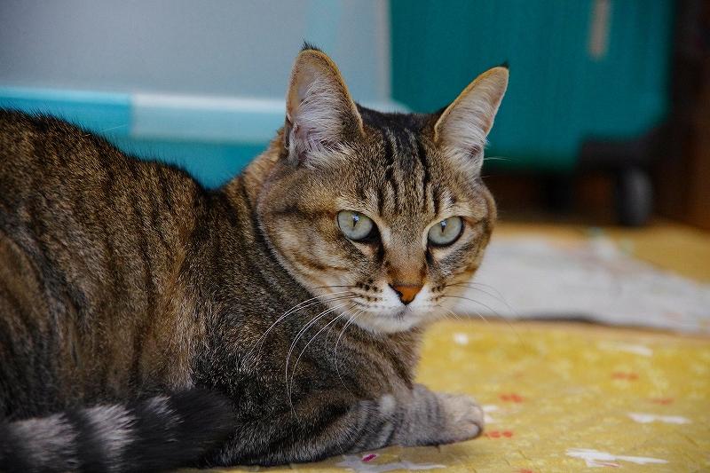 映画「世界から猫が消えたら」を鑑賞しました。