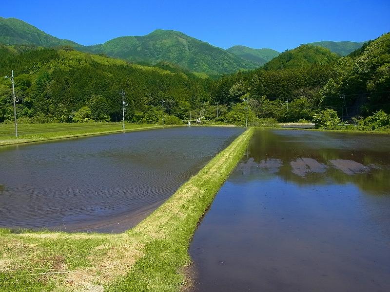 岡山県北部でイモリ探し