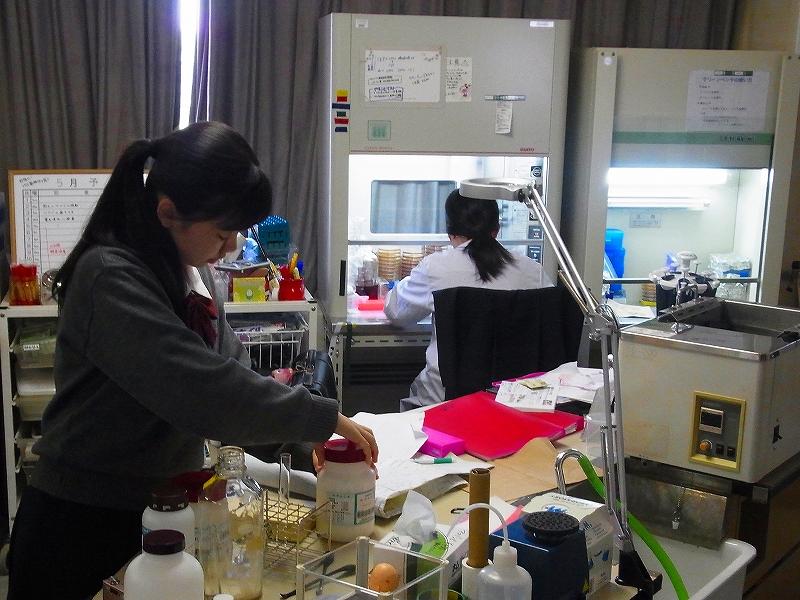 野生酵母の培養に着手