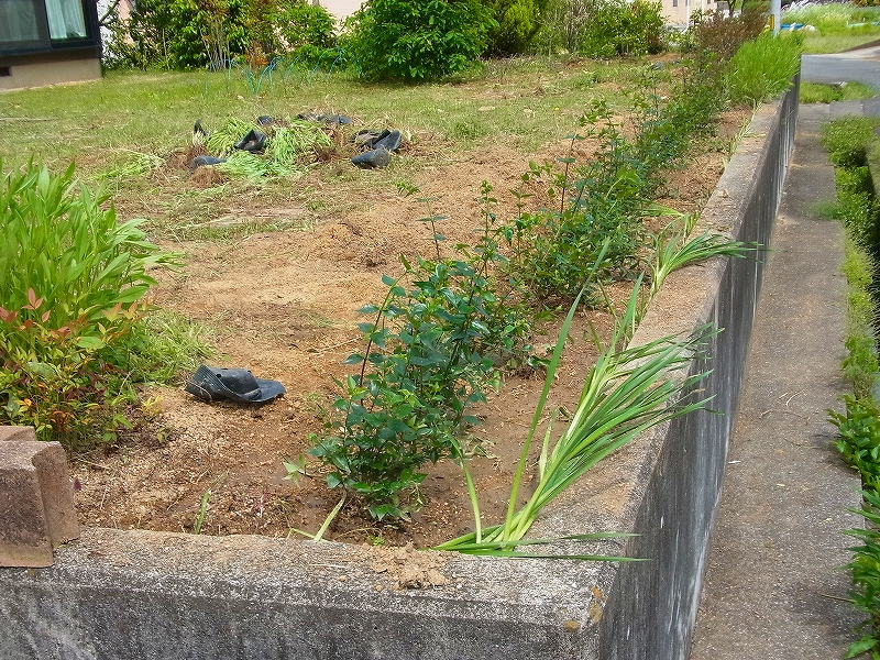 樹木の苗を植える
