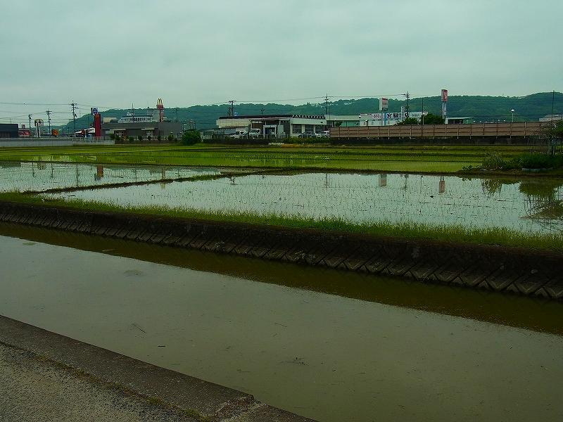 昨日、学校周辺の水田が田植え