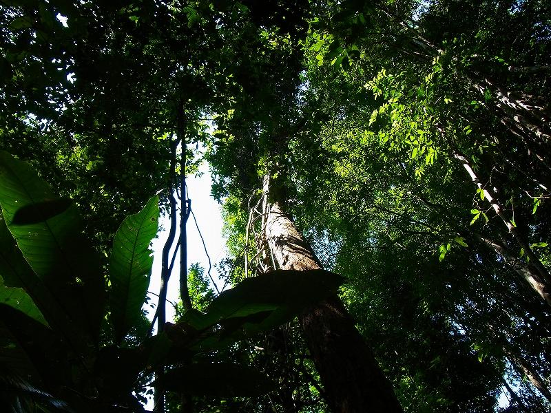 植物の多様性を学ぶ(5日目)