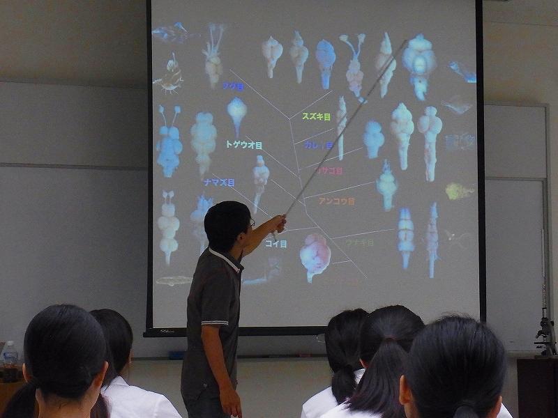 第12回 脊椎動物の神経系の起源と進化(愛媛大学理学研究科 村上安則)