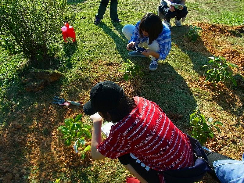 ツン・フセイン・オン大学の構内で樹木の苗を植えました。