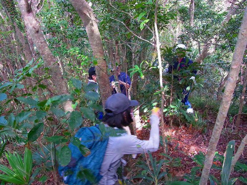 座間味島で森林実習