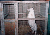 飼育動物イメージ