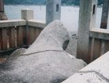 「亀岩」野外彫刻イメージ